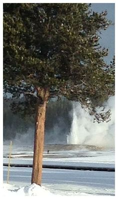 Yellowstone geyser erupts for first time in years -- Sott.net
