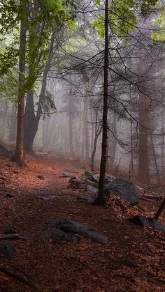 Beautiful Photos Of Nature, Nature Photos, Amazing Nature, Beautiful Landscapes, Best Nature Pictures, Beautiful Landscape Photography, Beautiful Forest, Tres Belle Photo, Foggy Forest