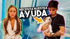 CARLOS ESTÁ ENFERMO *mi perro necesita ayuda*
