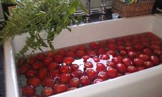 Rohl Farm Sink with Tomatoes!