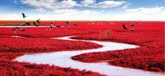 4. Red Beach, Panjin, China