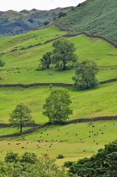 ✯ Out To Pasture - Cumbria, UK