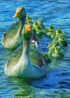 Pin on cute animals Most Beautiful Birds, Pretty Birds, Love Birds, Beautiful Family, Cute Baby Animals, Animals And Pets, Funny Animals, Exotic Birds, Colorful Birds