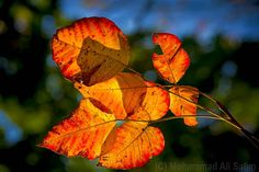 #autumn #leaves #yellow #red