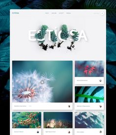 Dribbble - estiosa.png by Erik Messaki