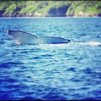 whale tail from niue