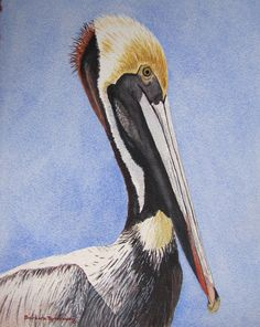 Brown Pelican Bird Portrait Watercolor by BarbaraRosenzweig, $52.00