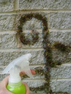 Tag your garden with a moss masterpiece.