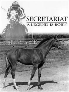 Beautiful horse, beautiful print…
