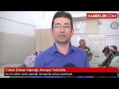 MEŞHUR TOKAT ERBAA YAPRAĞI-ERBAA HAS YAPRAK www.erbaahasyaprak.co