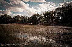 365 - D145  Swamp Thing / La Cosa del Pantano
