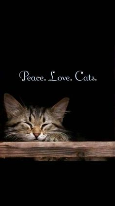 Peace, love, cats - peaceful tabby cat - Rania Loez Home Cool Cats, I Love Cats, Crazy Cats, Cute Kittens, Cats And Kittens, Tabby Cats, Catsu The Cat, Animals And Pets, Cute Animals
