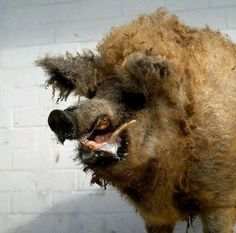 The taxidermy: | 13 Examples Of Taxidermy Gone TerriblyWrong