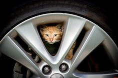 Kitty In My Car And I Want To… - http://cutecatshq.com/cats/kitty-in-my-car-and-i-want-to/