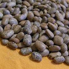 Blue Speckled Tepary Bean Seeds
