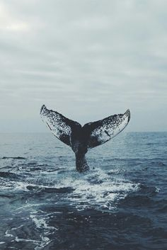 whale, ocean, and sea image Ocean Wallpaper, Tumblr Wallpaper, Iphone Wallpaper Whale, Ocean Creatures, Photo Wall Collage, Humpback Whale, Blue Aesthetic, Ocean Life, Aesthetic Pictures
