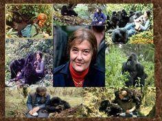 Dian Fossey - Thank you Diane! Primates, Gorillas In The Mist, Dian Fossey, Chimpanzee, Orangutans, Jane Goodall, Out Of Africa, Great Videos, Sierra Leone