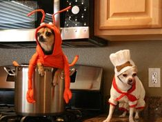 Your little tyke will be the toast of the town in this culinary-inspired dog Halloween costume! Great paired with our Lobster costume: http://www.baxterboo.com/p.cfm/lobster-dog-halloween-costumecasual-canine