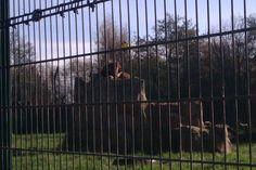 (blackpool zoo, 2014)