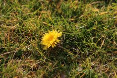 A lonely hawkbit.