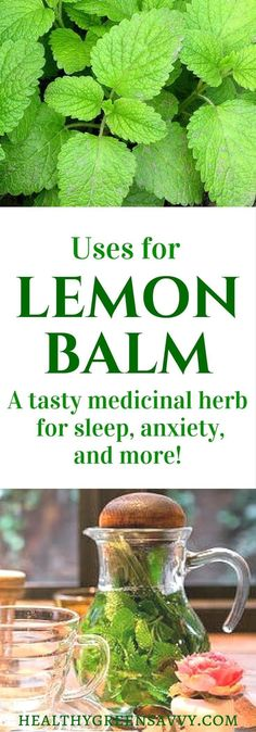 Lemon balm is an amazing herb that deserves a place in your garden and herbal remedy arsenal. Click to find out more or pin to save for later.   lemon balm uses   garden   medicinal plants   sleep tea   herbal remedies   natural remedies   healthygreensavvy... #vitamins #vitaminC #vitaminA #L4L