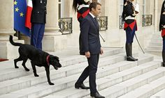 French voters have turned on President Emmanuel Macron with 57 per cent saying they are 'dissatisfied' with his performance, less than four months after his landslide election victory. Emmanuel Macron, Man And Dog, Videos, Victorious, French, Dogs, Fictional Characters, Presidents, Reunions