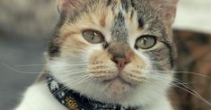Swedish Scientists Are Studying Cats to Better Learn How They Communicate - World's largest collection of cat memes and other animals Animals Images, Animals And Pets, Cute Animals, Cat Info, What Cat, Animal Science, Cat Behavior, All About Cats, Cool Cats