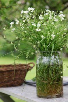 In the Garden Irish Cottage, Daisy, Moon Garden, Deco Floral, Gras, Green Life, Simple Pleasures, Fresh Herbs, Horticulture