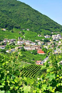Delicanto Custom Luxury Italy Tours. We got an insiders look at the Veneto and Friuli Venezia Giulia Regions of Italy! We met some amazing people with fascinating stories about their histories in this region and their passion about the food and wine they produce. Click to read more!