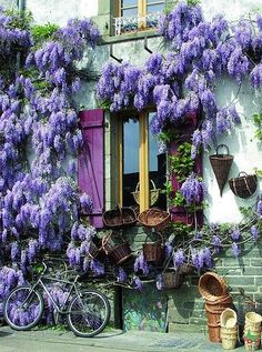 I have tried to grow wisteria in southern BC - very challenging, usually unsuccessful. window at rochefort-en-terre, france Beautiful World, Beautiful Gardens, Beautiful Flowers, Wonderful Places, Beautiful Places, Gazebos, Burgundy France, France Photos, Beaux Villages