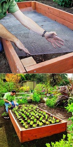 Country Lifestyle Line your raised bed with chicken wire to keep out gophers and moles! via Pinterest from gardeningworld.org