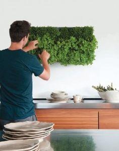 verticale kruidentuin - leuk voor in de keuken. Zelf kruiden kweken (hangend). #herbs