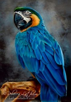 Exotic Brilliance - Blue and Gold Macaw