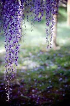 """i think it pisses God off if you walk by the color purple in a field somewhere and don't notice it."" -alice walker"