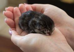 A tiny bit of a kitten!