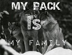 pack of wolves --- the ancestor of the dog and never forget that dogs even though domesticated, still have a great degree of wolf instincts Wolf Pack Quotes, Wolf Qoutes, Lone Wolf Quotes, Highland Games, Teen Wolf, All About Wolves, Of Wolf And Man, Native American Wolf, Alpha Wolf
