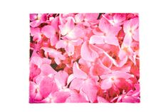Title: Flora 1...These are fuchsia hydrangea petals that bloom at the entrance to my secret garden!