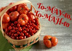 """Florida: uno studio per rendere i pomodori più """"gustosi"""" - Fruitbook Magazine Modern Farmer, Beta Carotene, Food Science, How To Get Rid Of Acne, Sports Nutrition, The Fresh, Being Ugly, Health And Wellness, Fruit"""