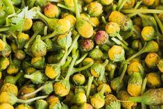 propriedades do jambu Sprouts, Banana, Vegetables, Food, Tooth Pain, Health Benefits, Fat Burning, Herbs, Productivity