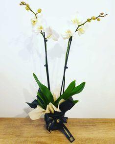 "13 aprecieri, 0 comentarii - BLOOMERIA (@bloomeria.ro) pe Instagram: ""Wʜɪᴛᴇ Pʜᴀʟᴀᴇɴᴏᴘsɪs 🌱 #bloomeria #welcometotheworldofflowers #february #valentinesday #vday…"""