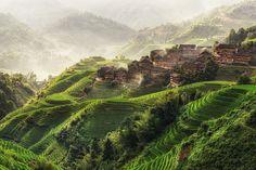 Longji Rice Terrace, Guangxi, China  Links:   Licensing Options     Prints