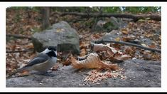 Lac Lemay Écureuil et oiseaux Pictures, Animals, Photos, Animales, Animaux, Animal, Animais, Grimm