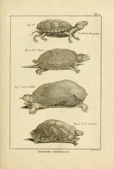 Tableau encyclopédique et méthodique des trois règnes de la nature : - Biodiversity Heritage Library
