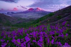 Mt. St. Helens, Washington -  USA
