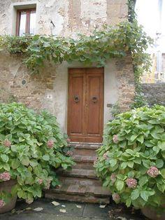 Montepulciano Hydrangea