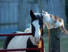 Every cat needs a horse