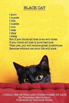 I love my black cat. Every black cat I have encountered has always been the sweetest cat! its the non-black ones that are a pain! I Love Cats, Cute Cats, Funny Cats, Adorable Kittens, Crazy Cat Lady, Crazy Cats, Cat Poems, Cat Facts, Warrior Cats