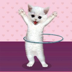 GIPHY is your top source for the best & newest GIFs & Animated Stickers online. Find everything from funny GIFs, reaction GIFs, unique GIFs and more. I Love Cats, Crazy Cats, Cute Cats, Funny Cats, Cute Baby Animals, Funny Animals, Gato Gif, Dance Images, Dancing Cat
