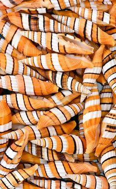 Orange Spirals