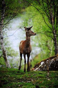 Ein Reh steht allein im Wald